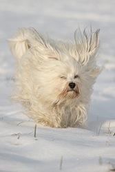 Hund mit Segelohren