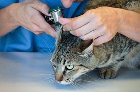 consultation chez le vétérinaire